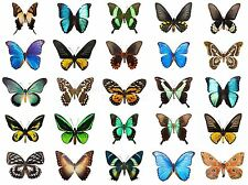 ART PRINT POSTER PHOTO TROPICAL BUTTERFLY COLLAGE DISPLAY LFMP1175