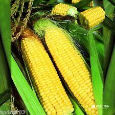 Corn seeds Trophy F1 5 g Monsanto Netherlands кукуруза Трофи F1 S0617