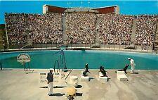 Sea Arena Marineland of the Pacific California CA Postcard