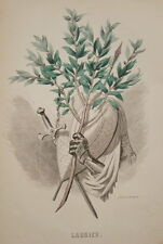 GRANDVILLE-FLEURS ANIMEES-GRAVURE LAURIER 1852 PRINT