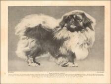 Pekingese Dog Champion Nik-Ko of Crossogue, vintage print authentic 1935*