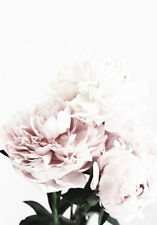 MODERN PINK PEONIES ROSES * LARGE A3 SiZE QUALITY CANVAS PRINT