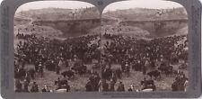 Jour du marché aux bestiaux Gihon Israël Palestine Photo Stereo Vintage Citrate