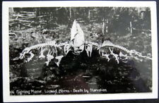 Alaska? 1940's Fighting Moose ~ Locked Horns ~ Death By Starvation ~ Rppc