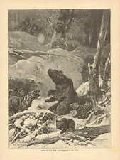 Hunting, Dogs, Attack On A Bear, Momma Bear & Her Cubs,1894 German Antique Print