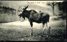 MAINE, BULL MOOSE IN MAINE, UNUSED, VGC,   (188