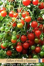Tomate cerise « Chadwick » 20 graines méthode Bio (seed Tomato)