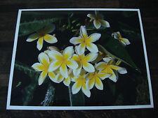 WHITE YELLOW PLUMERIA FLOWERS LIMITED EDITION METALLIC FINISH PHOTO 1 of 100