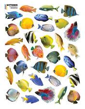 Aufkleber Sticker Wandaufkleber Klein Fisch Fische Fish Aquarium Bad Wanne WC