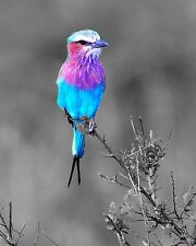 Teal Purple Gray Bird Art Photo Print Wall Art Home Decor Wildlife Picture w Mat