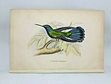 DELUXE ED Hand-colored Plates 1840 Jardine History Hummingbirds #2 Blue-bellied
