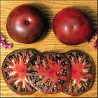 Black From Tula Tomato Seed
