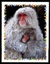 Panini-Amici cucciolotti misión animal amigos sticker nº 193