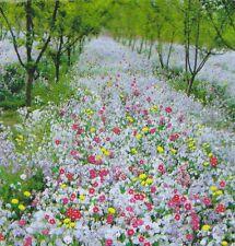 Flower Seed - shade-tolerance wild flowers mix 200 seeds Garden yard Patio Plant