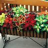 EB_ CG_ CO_ 50Pcs Mix Colors Coleus Blumei Seeds Bonsai Potted Leaves Plant Deco