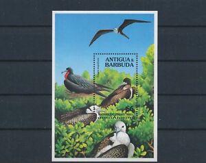 LO55699 Antigua & Barbuda frigatebird birds good sheet MNH