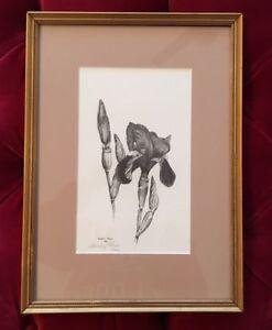 Vintage SIGNED/ NUMBERED B&W Iris Botanical Print - LISTED ARTIST S.PRICE!!