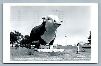 AUDUBON IA WORLD'S LARGEST BULL ALBERT 1985 VINTAGE REAL PHOTO POSTCARD RPPC