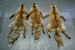 3 PC European Red Fox Skin Paws claws Hunting Taxidermy Tanned