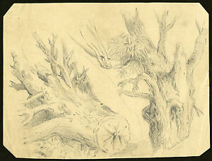 Antique Drawing-STUDY-PENCIL-TRUNK-TREE-Willebois-c.1866