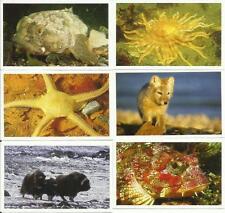 Küstengold - Combi - Familia - Meereswelten - 10 Sticker aussuchen - Fauna-Tier