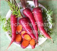 🔥 🥕 Karotte  cosmic purple violette Karotten ** Rarität 50 Samen Gemüse