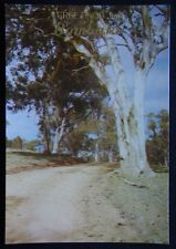 Greetings From Bombala Gum Tree Murfett Postcard (P248)
