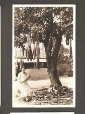 Vtg Postcard Sausage Tree Maude Black Coconut Grove Fl Rppc Ingraham Highway Fla