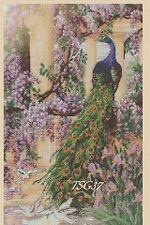 Cross Stitch Chart - Peacock -- Birds no. 334 TSG37 - FREE UK P&P