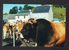 SAINT-URCIZE-en-AUBRAC (15) FOIRE , Marché aux BOVINS en Aout 2000