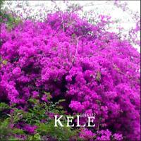 100 PCS Seeds Purple Bougainvillea Spectabilis Garden Perennial Plants Flowers G