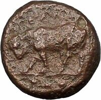 GELA In SICILY 420BC Bull & Gelas Authentic Ancient Greek Coin i51701
