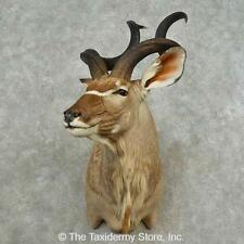 #16701 P | Greater Kudu Taxidermy Shoulder Mount For Sale