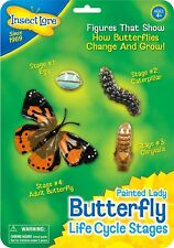 Insect Lore - Butterfly Life Cycle Stages