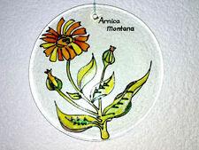 Glasbild Arnica Montana Arnika Blume Blüten Fensterbild