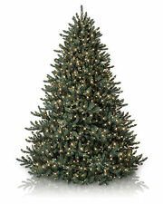 Classic Blue Spruce lChristmas Tree,7.5 ft ,CLEAR LIGHTS from BALSAM HILL.