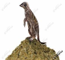 ORIGINAL Artist Signed Drawing of Meerkat Nature Wildlife Funny Furry Animals