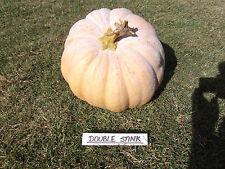 Pumpkin DOUBLE STINK-Pumpkin Seeds-TERRIBLE NAME, GREAT FRUIT-20 SEEDS