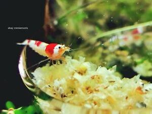 Soya husk pellets 'Shrimp Snow' - Long Lasting Shrimp/aquarium food