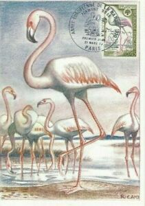 Card Postal CEF 1er Day France Year European of The Nature 1970