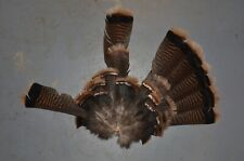 Wild Turkey Tail Fan Feathers Fly Tying Wings Rustic Cabin Decor Crafts
