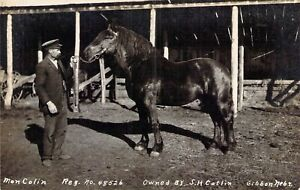 1910 RPPC Gibbon, NB: Advertising for Stud service. Mon Colin Owned by SH Catlin