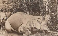 -Carte Postale ancienne Afrique Safari Elephant Trophy Hunting