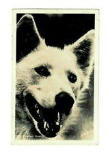 Rppc Alaskan Husky Dog Winter & Pond Photo Postcard Vintage 1944 Juneau pm