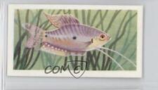 1957 Mitcham Foods Aquarium Fish Series 2 #33 Three-Spot Blue Gourami Card 1i3