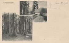 VANCOUVER BC– Group of Firs in Stanley Park and Drive at Brockton Point–udb-1905