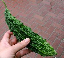Karawila (Karela)/Green Bitter Melon /The Wonder Cure forDiabetes/5Finest Seeds