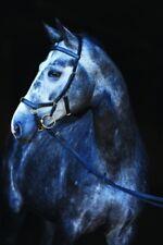 HORSEWARE Rambo Micklem Multi Bridle 3in1 Zaum Trense LPO Trensenzaum UVP199,90�'�