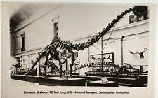 Devolite Peerless Rppc Dinosaur Skeleton Smithsonian Diplodocus postcard