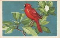 National Wildlife Federation Songbird CARDINAL in MAGNOLIA TREE Postcard -UNUSED
